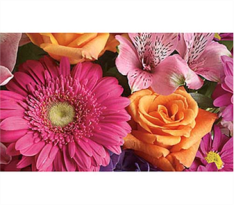 Friday Specials in Ottawa ON, Exquisite Blooms
