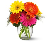 Teleflora's Fiesta Gerbera Vase in Edmonton AB, Petals On The Trail