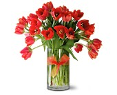 Teleflora's Radiantly Red Tulips Premium in Dallas TX, Petals & Stems Florist