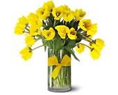 Teleflora's Sunny Yellow Tulips - Premium in Dallas TX, Petals & Stems Florist