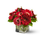 Teleflora's Gorgeous Gerberas in Dallas TX, Petals & Stems Florist