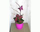 Butterfly Sweet in Dallas TX, Petals & Stems Florist
