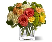 Teleflora's Citrus Splash by Petals & Stems in Dallas TX, Petals & Stems Florist