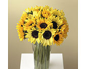 Sunflower Supreme in Portland, Oregon, Portland Florist Shop