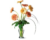 Grand Gerberas by Petals & Stems in Dallas TX, Petals & Stems Florist