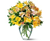Sparkling Alstroemeria in Charlotte NC, Starclaire House Of Flowers Florist