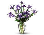 Incredible Iris in Dallas TX, Petals & Stems Florist