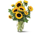Shining Sunflowers in St. Louis MO, Walter Knoll Florist