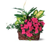 Azalea Attraction Basket by Petals & Stems in Dallas TX, Petals & Stems Florist