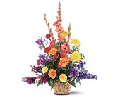 Rainbow Basket by Petals & Stems in Dallas TX, Petals & Stems Florist