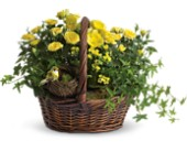 Yellow Trio Basket in Franklin IN, Bud and Bloom Florist