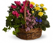 Blooming Garden Basket in Franklin, Indiana, Bud and Bloom Florist