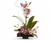 Imagination Blooms with Cymbidium Orchids in Portland OR, Portland Coffee Shop