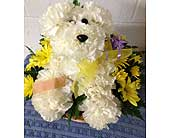 Doggone Adorable Get Well Dog in Johnstown PA, B & B Floral