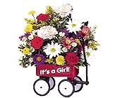 It's a Girl Wagon in Dallas TX, Petals & Stems Florist