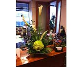 You are Classy in Charlotte, North Carolina, Starclaire House Of Flowers Florist