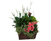 Living Blooming Garden Basket in Methuen MA, Martins Flowers & Gifts
