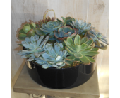 Succulent Love in Dallas TX, Petals & Stems Florist