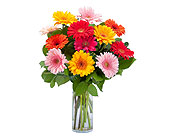 Grand Gerbera in Methuen MA, Martins Flowers & Gifts