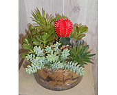 Succulent Garden in Dallas TX, Petals & Stems Florist