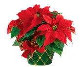 Desktop Poinsettia Tin in Birmingham AL, Norton's Florist