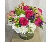 Mystique in Dallas TX, Petals & Stems Florist