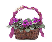 Very Violet Basket in Methuen MA, Martins Flowers & Gifts