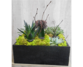 Contemporary Cacti in Dallas TX, Petals & Stems Florist