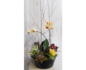 Orchid Garden in Dallas TX, Petals & Stems Florist