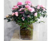 Earthy Azalea in Dallas TX, Petals & Stems Florist