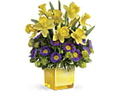 Teleflora's Playful Springtime Daffodil Bouquet, picture