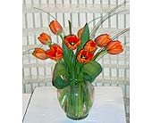 Tulips in Dallas TX, Petals & Stems Florist