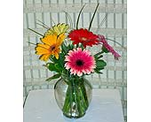 Gerbers in Dallas TX, Petals & Stems Florist