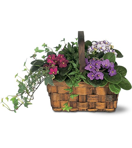 Mixed African Violet Basket in North Bay ON, The Flower Garden