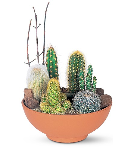 Local plant delivery in edmonton sherwood park and st albert cactus garden negle Images