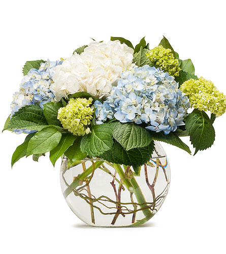 Mighty Hydrangea in Bozeman MT, Langohr's Flowerland