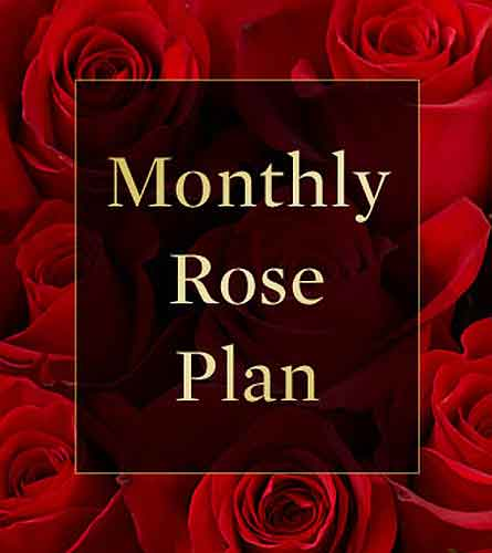 Monthly Rose Plan in Kingston ON, Pam's Flower Garden