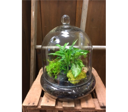 Cloche Terrarium in Ashburn VA, Lavender Fields