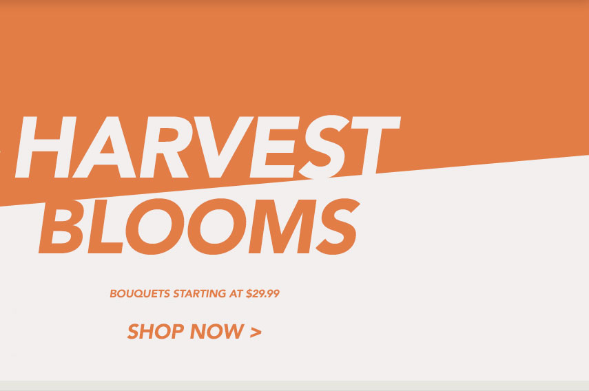 Harvest Blooms!
