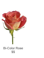 Bi-Color Rose