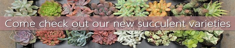 Come check out our new succulent varieties